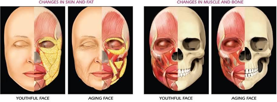 change skin fat muscle bone